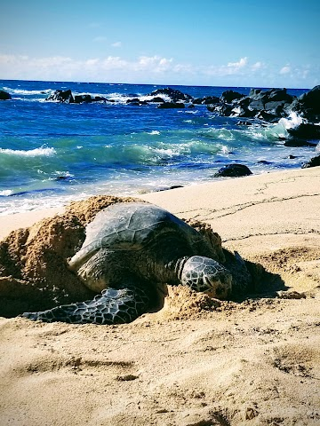 Laniakea Beach image