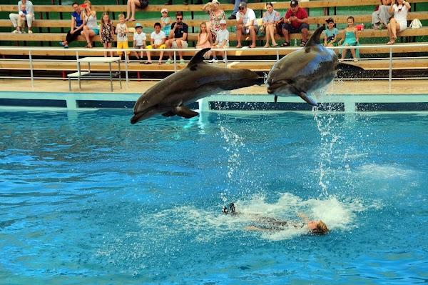Popular tourist site Aksu Dolphinarium in Antalya