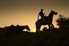 Image 3 of חוות סוסים צעד בשניים, אחיהוד
