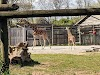 Image 7 of Zoo Knoxville, Knoxville