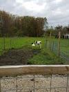 Image 8 of Shaw Farm, Dracut