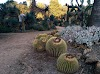 Image 7 of Arizona Garden, Stanford