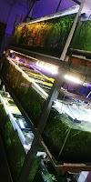 Image 3 of סנפירים-חוות גידול דגי נוי, גני טל