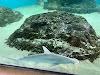 Image 8 of Mote Aquarium (Main), Sarasota