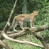 Image 8 of Pittsburgh Zoo & PPG Aquarium, Pittsburgh