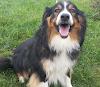 Image 2 of Union County Humane Society, Marysville
