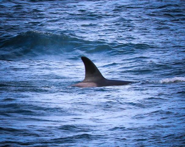 Orcas Island image