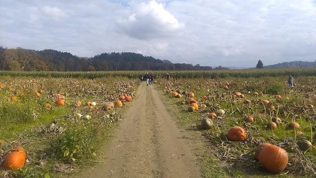 Bob's Corn & Pumpkin Farm