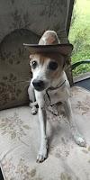 Image 5 of Doggone Pet Salon, Titusville