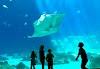 Image 4 of Georgia Aquarium, Atlanta