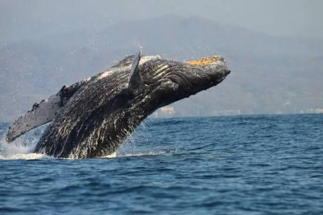 Biocean Wildlife Encounters