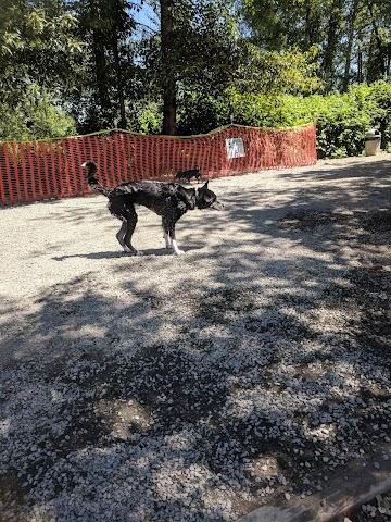 Marymoor Off-Leash Dog Park image