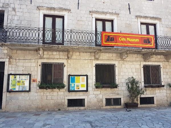 Popular tourist site Kotor Cats Museum in Kotor