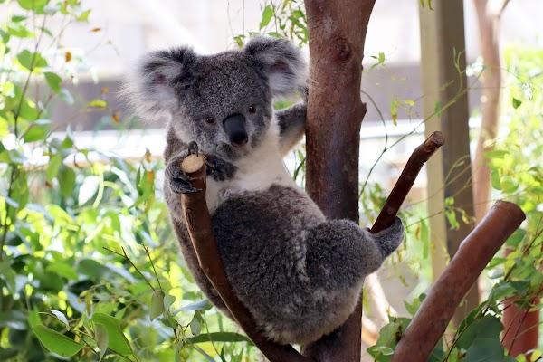 Popular tourist site WILD LIFE Sydney Zoo in Sydney