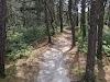 Image 6 of Atlantic White Cedar Swamp Trail, Wellfleet