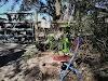 Image 7 of Alpaca Magic, Homosassa