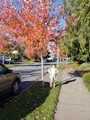 Use Waze to navigate to Swensson Park Abbotsford
