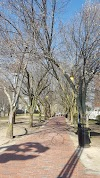Image 3 of Davis Square, Somerville