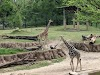 Image 3 of Dallas Zoo, Dallas