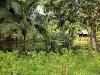 Imagen 7 de Villa Vanilla, Naranjito