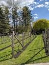 Image 7 of Birch Wood Vineyard, Derry