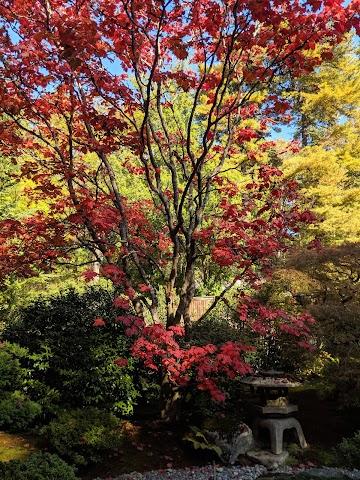 Washington Park Arboretum UW Botanic Gardens