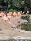 Image 5 of San Diego Zoo, San Diego