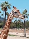 Image 6 of San Diego Zoo Safari Park, Escondido