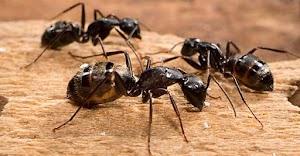 Top Line Pest Control - Port Coquitlam