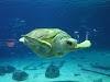 Image 8 of Adventure Aquarium, Camden