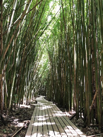 the bamboo forest mowie wowie suggestion content image