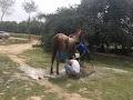 New Warriors Horse Riding Academy in gurugram - Gurgaon