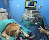 Imagen 3 de Veterinaria Doctor Brenes, San Vicente