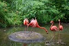 Image 5 of Pittsburgh Zoo & PPG Aquarium, Pittsburgh
