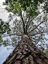 Image 7 of Etang de Cousseau Reserve Naturelle, Lacanau