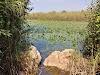 Image 4 of Givat HaShlosha, Givat HaShlosha