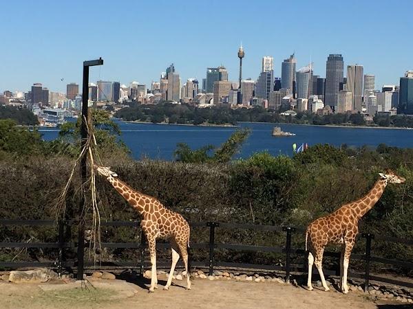 Popular tourist site Taronga Zoo Sydney in Sydney