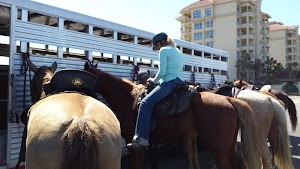 Happy Trails Walking Horses LLC