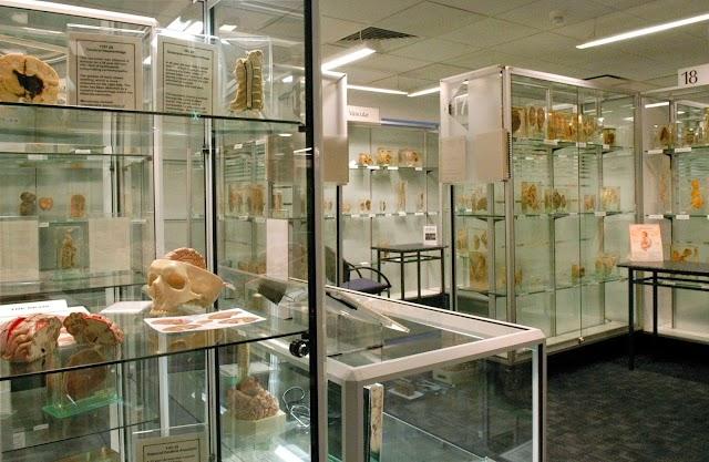 Museum of Human Disease