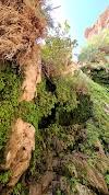 Image 7 of Ein Gedi Reserve, Ein Gedi