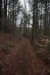 Image 4 of Ramsey Bluff Trail System at Hanging Dog Recreation Area, Murphy