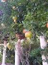 Image 6 of Poleg Mansion, Tel Yitzhak