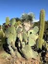 Image 6 of Arizona Garden, Stanford