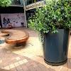 Image 3 of Woodlands Boulevard Shopping Mall, Pretorius Park, Pretoria
