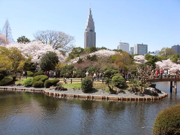 Popular tourist site Shinjuku Gyoen National Garden in Tokyo