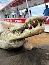 Imagen 2 de Crocodile Man Tour The Original, Jacó