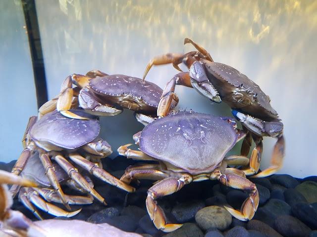 Chandler's Crabhouse