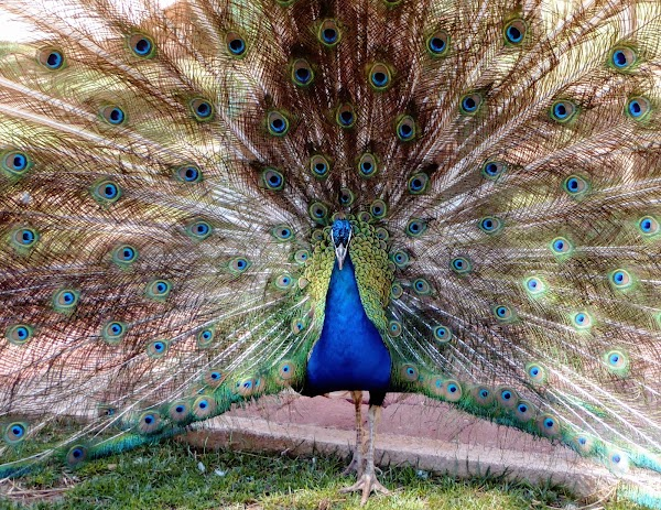 Popular tourist site Antalya Zoo in Antalya