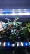 Image 7 of Dhika Aquarium, [missing %{city} value]
