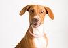 Image 8 of Blue Ridge Humane Society, Hendersonville